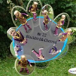 Blackbird cherrys